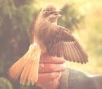 kõnnuõgija Kabli linnujaamas
