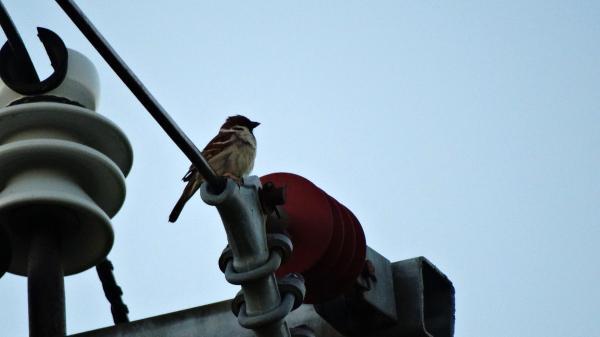 Linnade linnuvaatluspäev