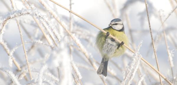 Talvine aialinnuvaatlus