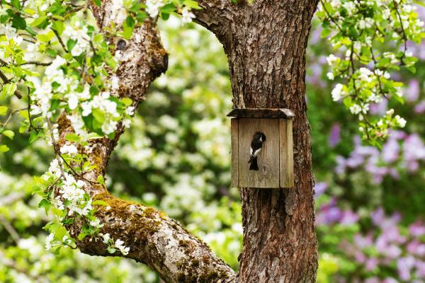 Algab suvise aialinnupäeviku hooaeg